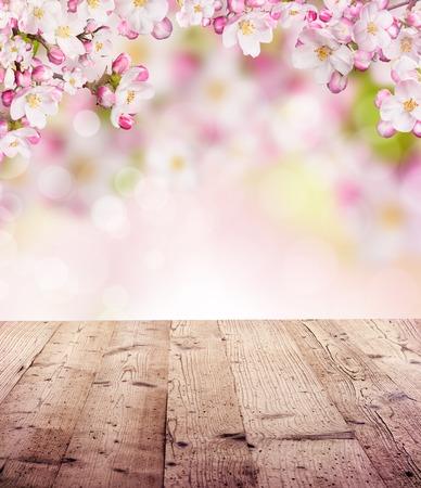 primavera: Primavera backgroud abstracto con tablas de madera y apaisada borrosa Foto de archivo