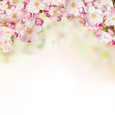 Spring blossoms on white background.