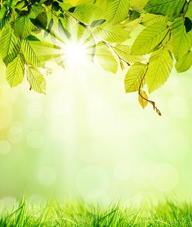 hornbeam: Green hornbeam leaves with blur background Stock Photo