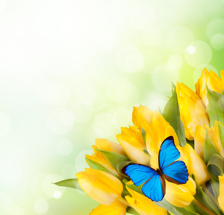 yellow butterfly: Boquet of yellow tulips with exotic butterfly