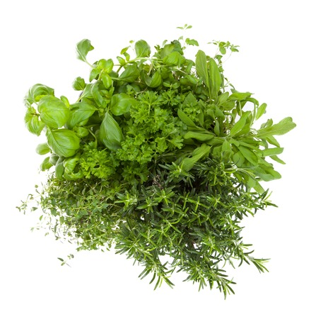 herbs white background: Various kind of fresh herbs isolated on white background Stock Photo