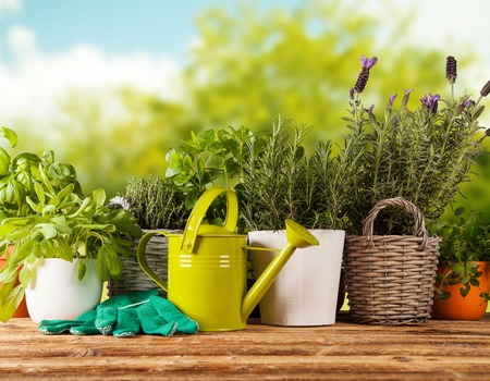 Various kinds of fresh herbs in flowerpots, placed on wooden table Stock Photo