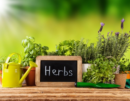 kitchen garden: Various kinds of fresh herbs in flowerpots, placed on wooden table Stock Photo