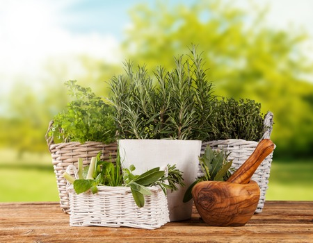 pot light: Various kinds of fresh herbs in flowerpots, placed on wooden table Stock Photo