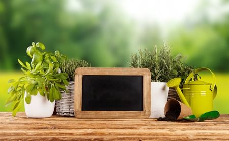 Various kinds of fresh herbs in flowerpots, placed on wooden table photo