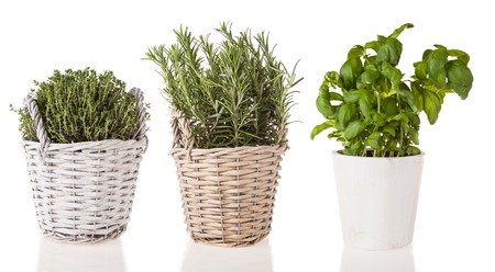 marjoram: Basil, rosemary and marjoram in pots, isolated on white background
