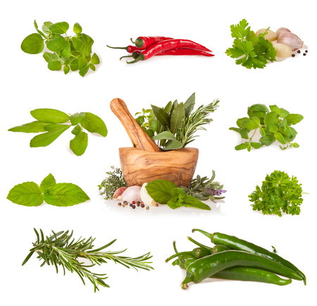 Various kind of fresh herbs with wooden mortar, isolated on white background photo