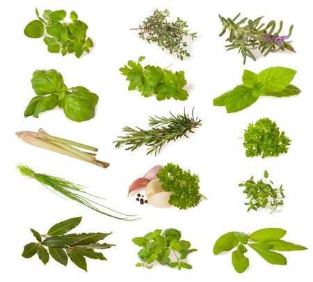Various kind of fresh herbs isolated on white background Imagens