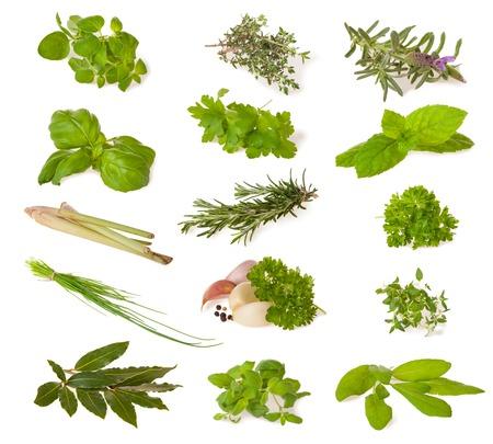 Various kind of fresh herbs isolated on white background Standard-Bild