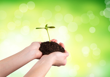 Woman hands holding young plant with green leaves. Concept of new life and environmet