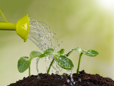 arroser plantes: L'arrosage peut arroser les jeunes plants en tas de terre