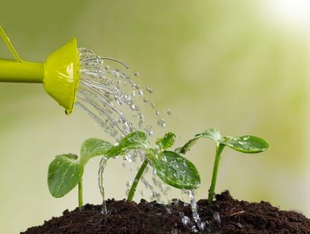 regar las plantas: Regadera riego de las plantas jóvenes en pila de suelo