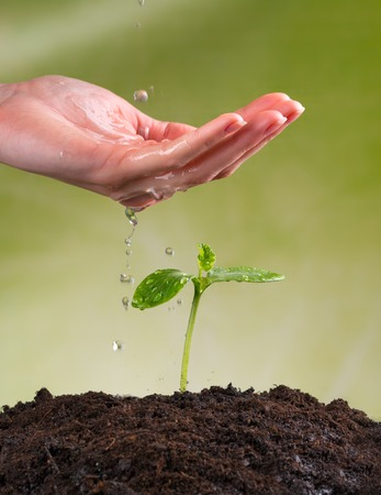 hand water: Woman hand watering young plant in pile of soil