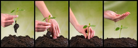 seeding: Concept of seeding and plant growing in collection