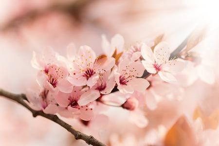 Frühlingsblüten Standard-Bild - 42390492