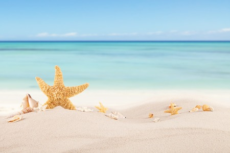 Sandy beach with seashells, blur azure water on background. Free space for text Stok Fotoğraf