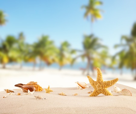 Sandy beach with seashells, blur azure water and palm trees on background.