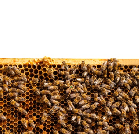 bee swarm: Detail af bees swarm working on honeycomb. Isolated on white background Stock Photo
