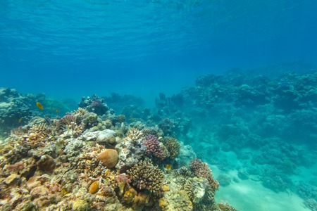 Beautiful coral reef with fish in Red sea Stock Photo