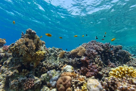 reef: Beautiful coral reef with fish in Red sea Stock Photo