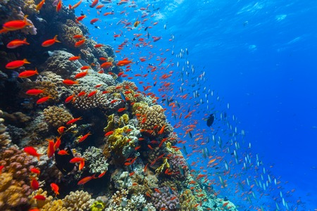 Beautiful coral reef with fish in Red sea Stockfoto