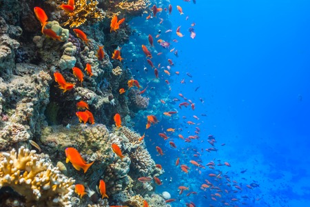Beautiful coral reef with fish in Red sea Stock fotó