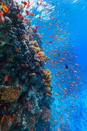 soft coral: Beautiful coral reef with fish in Red sea Stock Photo