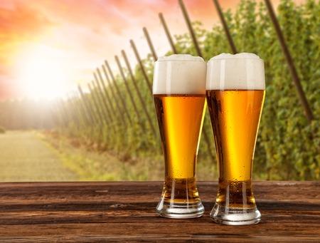 vasos de cerveza: Vasos de cerveza sirvieron en la mesa de madera con salto de campo en el fondo