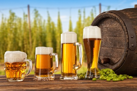 Biergläsern serviert auf Holztisch mit Fass. Hop-Feld auf den Hintergrund