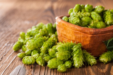 hop cone: Fresh green hops on a wooden desk, served in bowl. Low depth of focus