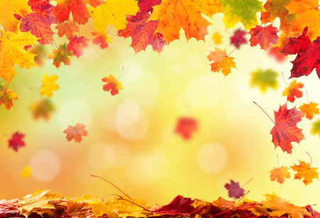 copyspace: autumn leaves background with copyspace for text
