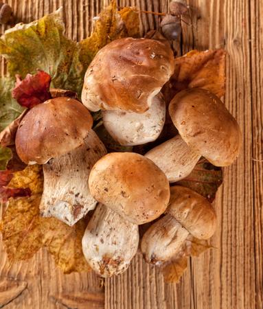 cep: Mushroom Boletus over Wooden Background. Autumn Cep Mushrooms Stock Photo