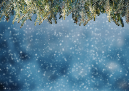Abstract snowy background with frozen fir branches