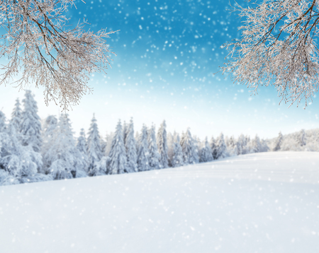 breeze: Snowy winter landscape with frozen breeze branches Stock Photo