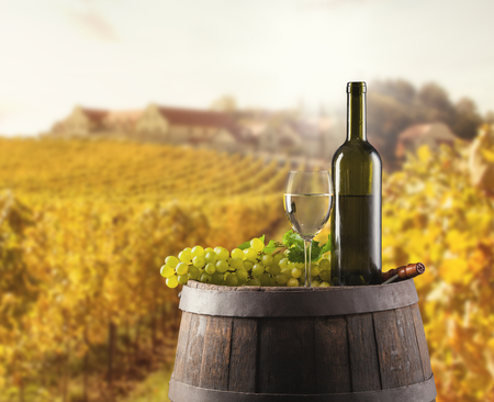 white wine: White wine bottle and glass on wooden keg. Vineyard on background Stock Photo