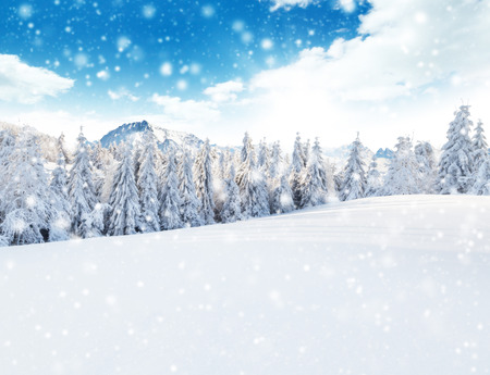 sky: Winter snowy forest with meadow and blue sky Stock Photo