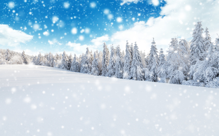 dolomites: Winter snowy forest with meadow and blue sky Stock Photo