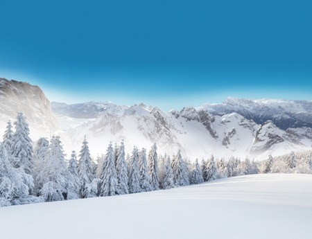 alpen: Winter snowy forest with alpen panorama and blue sky