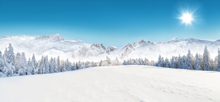 panorama: Winter snowy forest with alpen panorama and blue sky