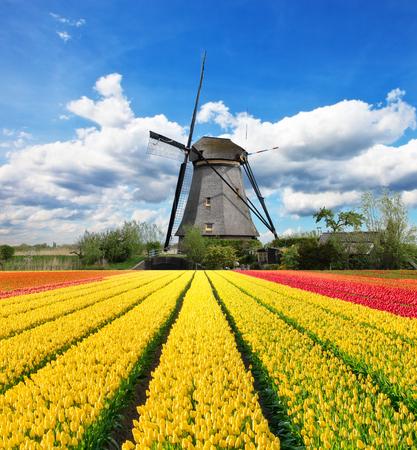 Levendige tulpen veld met Nederlandse molen, Nederland. Mooie bewolkte hemel Stockfoto - 50529140