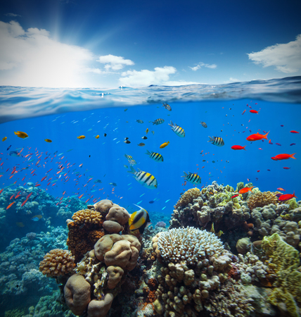 Underwater view of coral reef with horizon and water surface split by waterline. Summer holiday concept. High Resolution