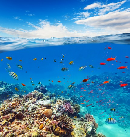seabed: Underwater view of coral reef with horizon and water surface split by waterline. Summer holiday concept. High Resolution