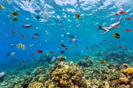 Female freediver floating at coral reef with beautiful tropical fish. Concept of summer holidays and underwater life Stock Photo
