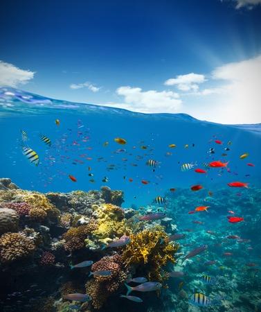 Podwodny widok rafy koralowej z horyzontu i powierzchni wody w rozbiciu na linii wodnej. Letnie wakacje koncepcji. Wysoka rozdzielczość