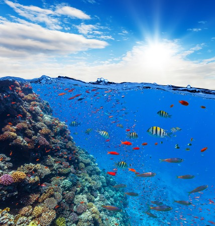 waterline: Underwater view of coral reef with horizon and water surface split by waterline. Summer holiday concept. High Resolution