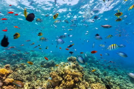water ecosystem: Coral reef and tropical fish in Red Sea, Egypt
