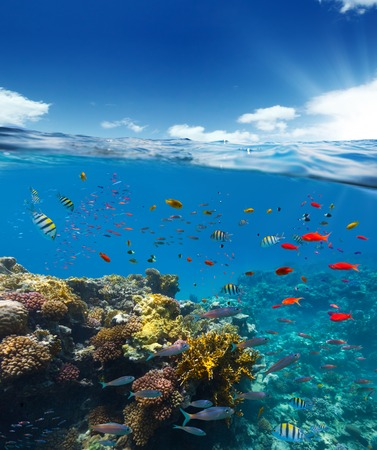 the surface of the water: Underwater view of coral reef with horizon and water surface split by waterline. Summer holiday concept. High Resolution