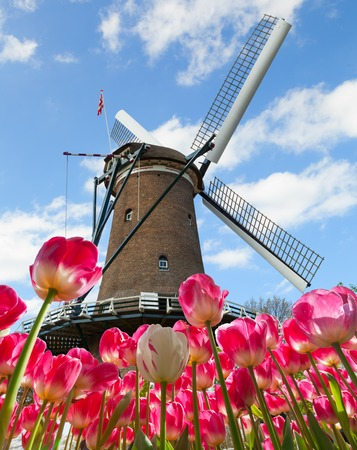 dutch landmark: Vibrant tulips field with Dutch windmill, Netherlands. Beautiful cloudy sky Stock Photo