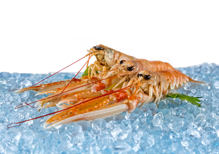 drifting ice: Fresh lobsters placed on ice cubes, isolated on white background Stock Photo