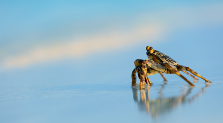 shore: Macro photo of crab on sandy beach